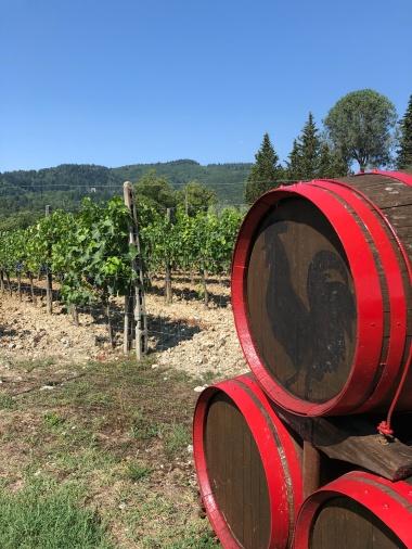 Vinogradi i mesta gde možete kupiti vino